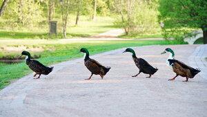"Почти ""Abbey Road"""