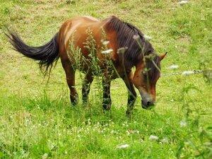 Далеко, далеко, на далёких лугах, кони щиплют траву